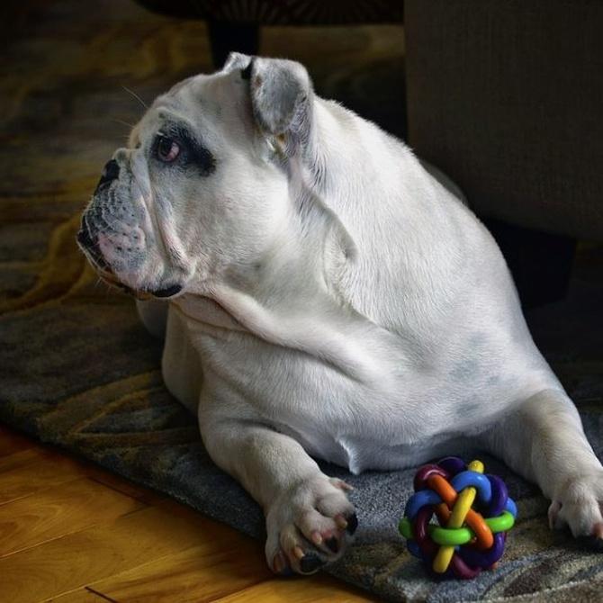 Algunos juguetes que debes tener para tu perro