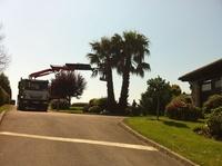 Empresas de jardinería en Cabezón de la Sal, poda y tala de árboles