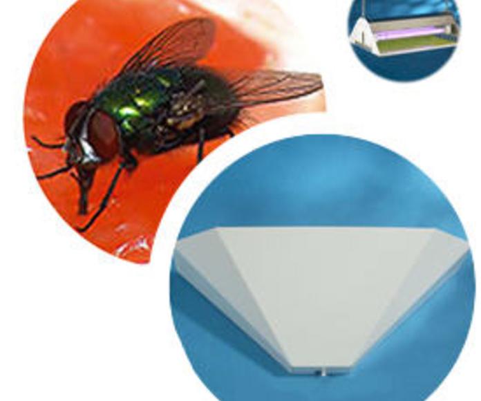 Insectos voladores