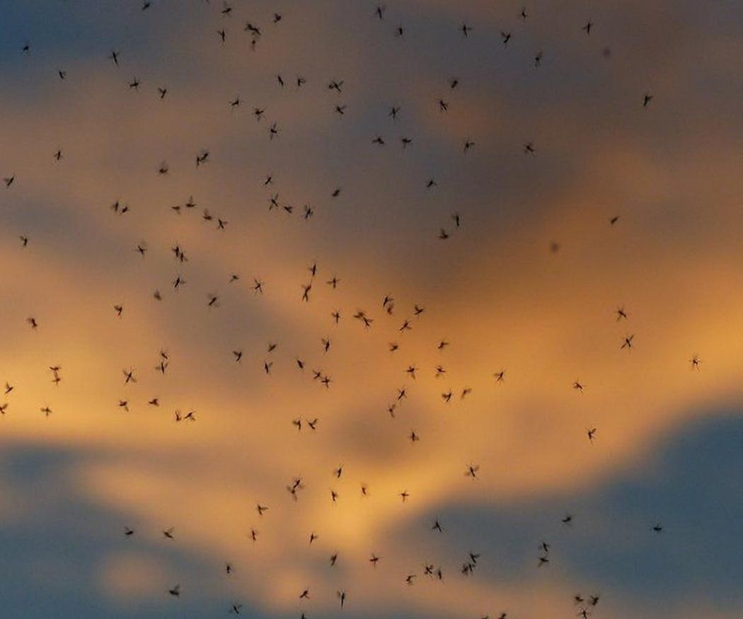 El peligro de las plagas que pueden venir de fuera de España