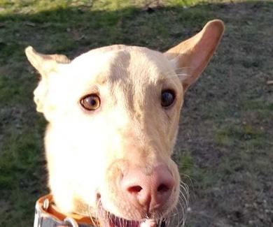 Guardería canina en Tres Cantos