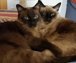 Can Exprés servicio veterinario a domicilio Zaragoza: Estos son Yigme y Merlín, inseparables. A Yigme le estamos cuidando la dieta para su pancreatitis y se ha corregido la sintomatología, un placer verlos.