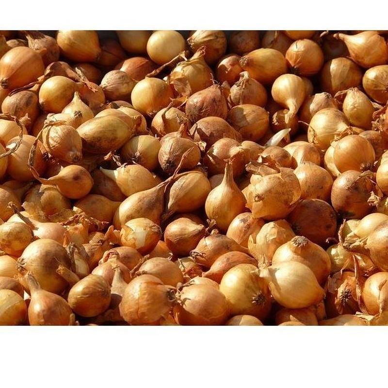 Chalotas: Productos de Mundifruit