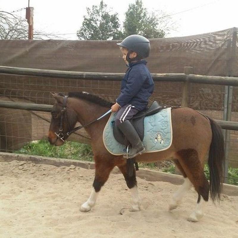 Clases de iniciación para los más pequeños. Llevar el pony por la pista!