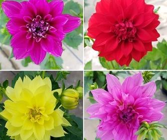 Amplia variedad de tamaños, olores y colores