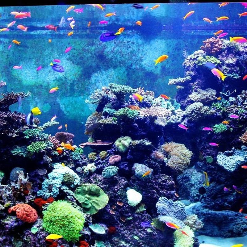 Paisajismo acuático: Productos y servicios de Natural Aquarium Pura Vida