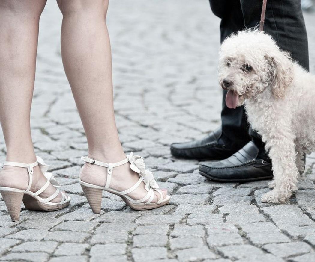 Consideración de las mascotas como bienes muebles y su tratamiento en los divorcios