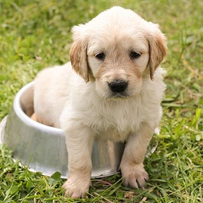 Primeras obligaciones y consejos cuando regalamos (o nos regalan) una mascota