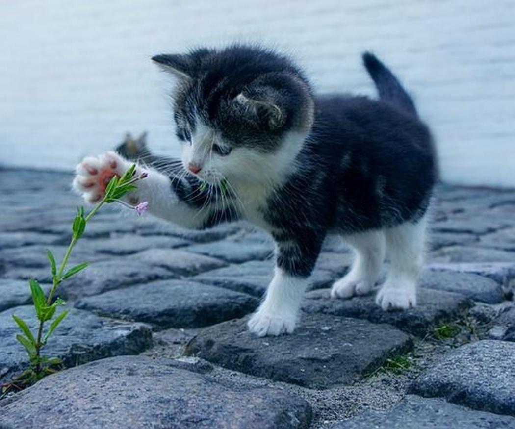 Medidas de prevención ante parásitos en los gatos