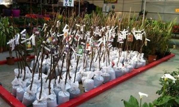 Viveros de plantas en Málaga - Semilleros La Palma, gran calidad y precios sin competencia