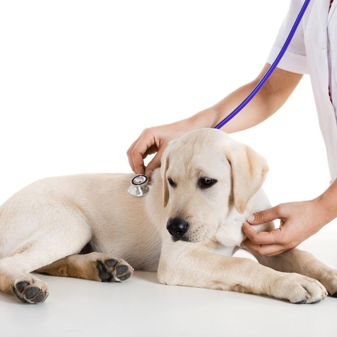 La importancia de la rapidez al ir a urgencias veterinarias