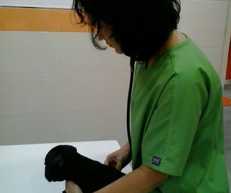 Medicina preventiva cachorros