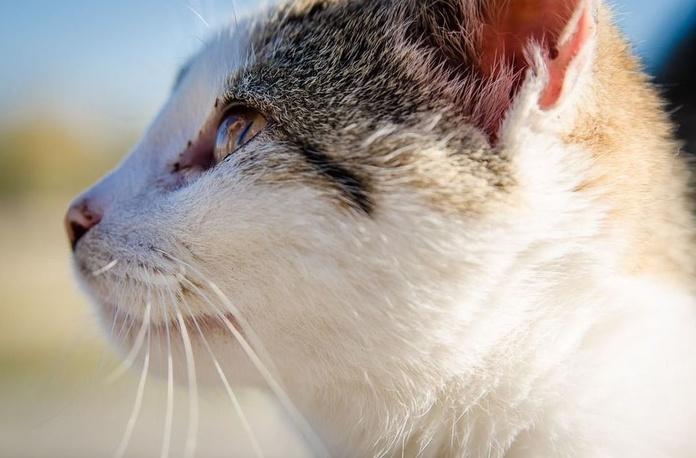 Rayos X y ecografías : Nuestros servicios de Clínica Veterinaria Zoosano