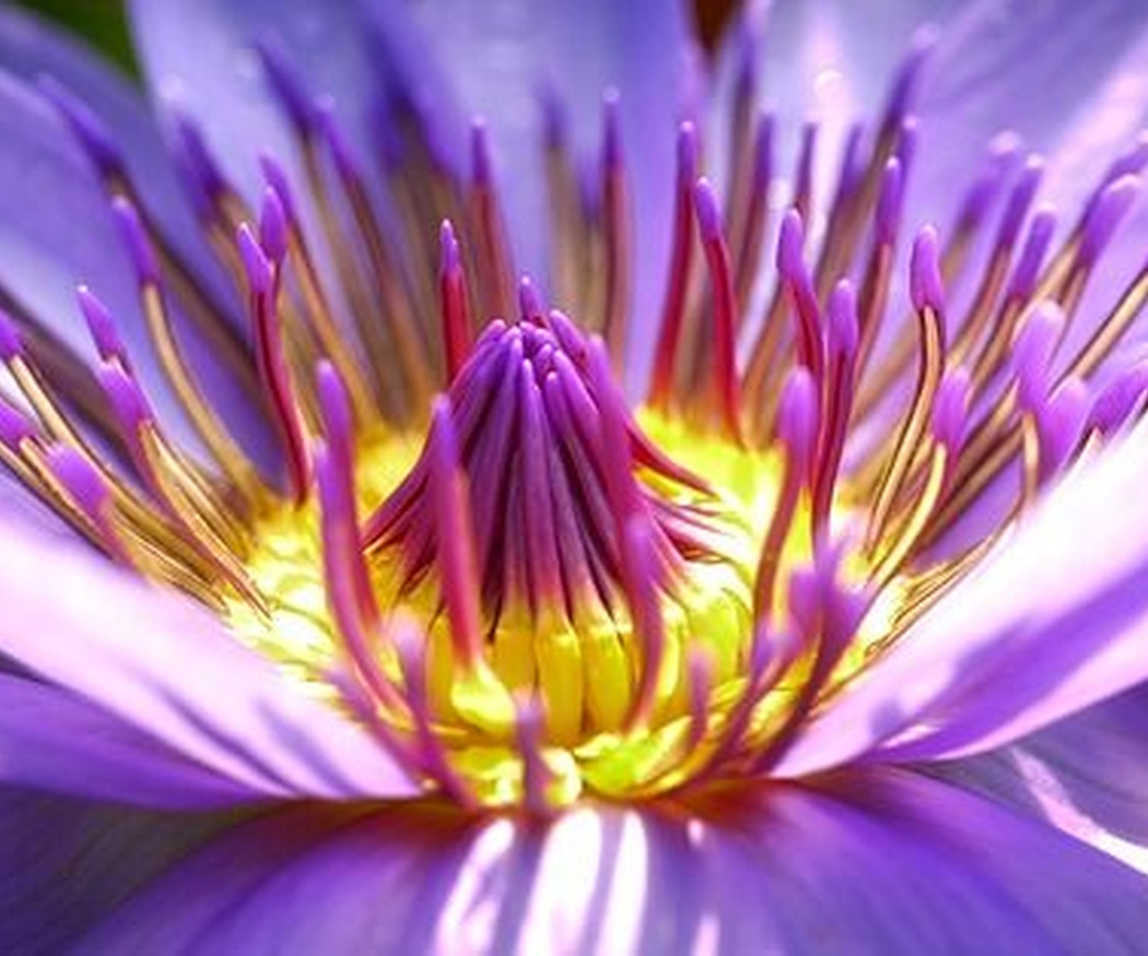 Cultivar flores exóticas en interior