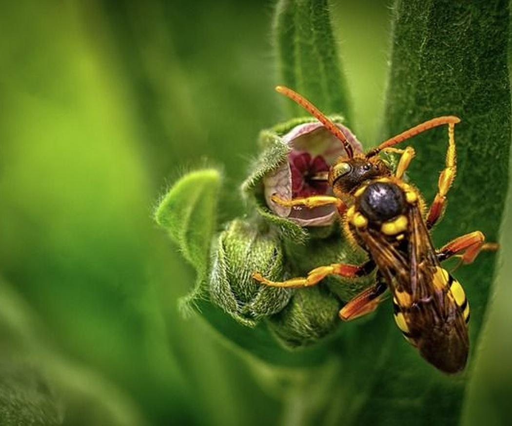 Cómo deshacerse de las avispas de forma segura