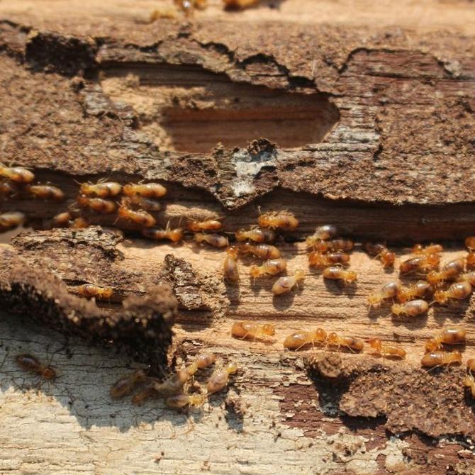 Di adiós a las termitas