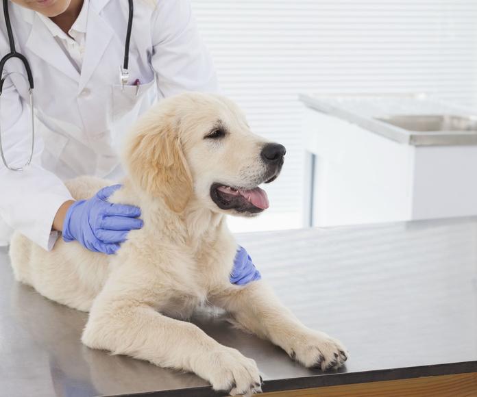 Medicina general: Servicios  de Centro Veterinario Bienestar Animal Almerimar
