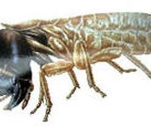 Tratamiento contra la termita