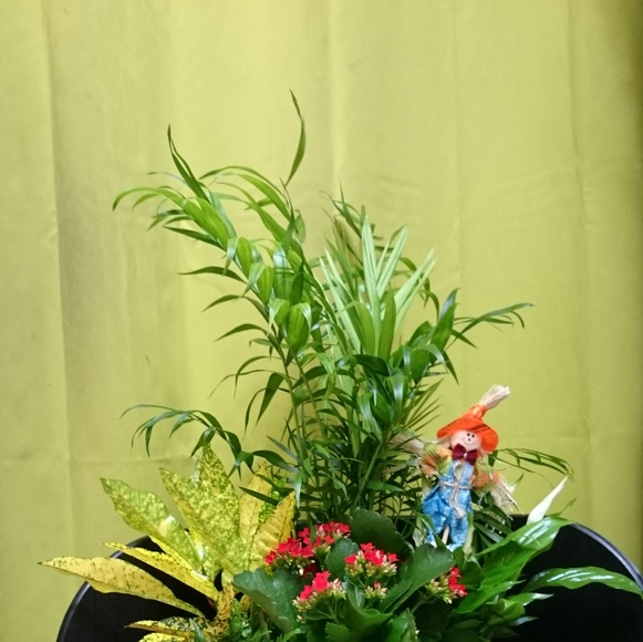 Centro de plantas:  de Floristería Contreras
