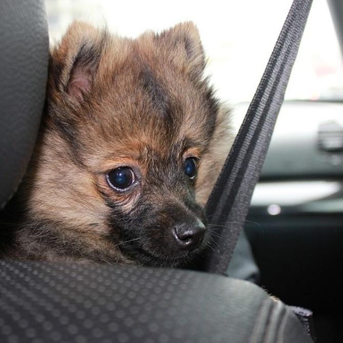 Qué hacer si ves un perro encerrado en un coche