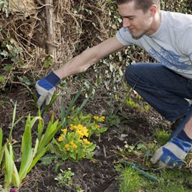 Ideas para preparar abonos naturales para tus plantas