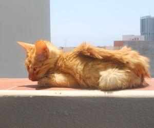 Consulta de medicina interna para mascotas en Tenerife