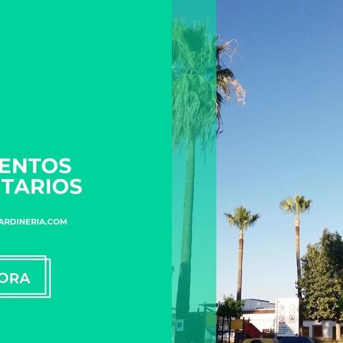 Poda en altura en Huelva | Arroyo Lorca Jardinería
