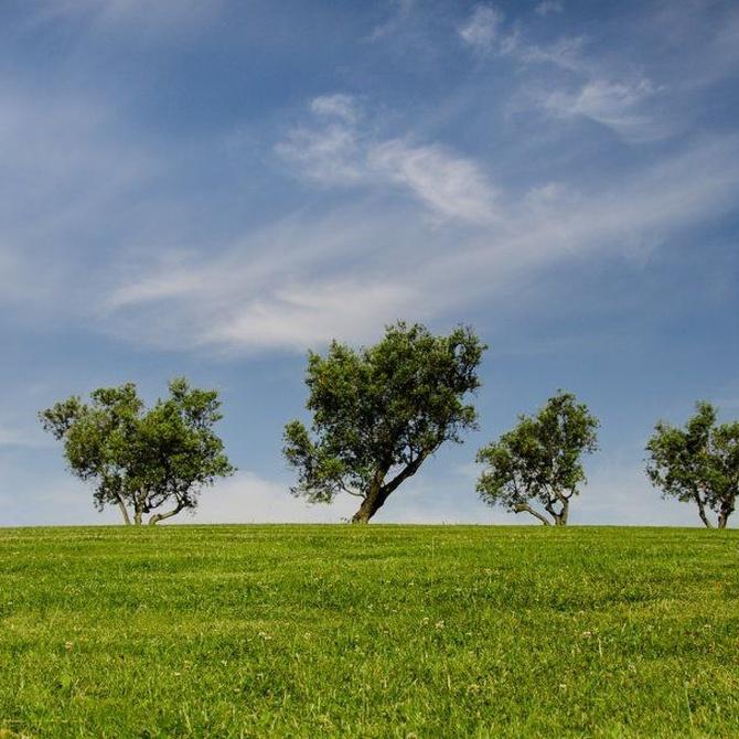 Mejora los beneficios de tu empresa y el impacto medioambiental con los palets reciclados