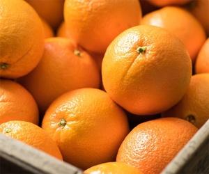 Empresa de exportación de naranjas en Guadassuar