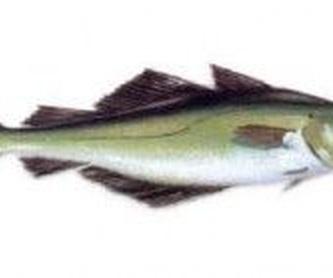 Pescados azules: Productos de Pescados Mariano Alonso