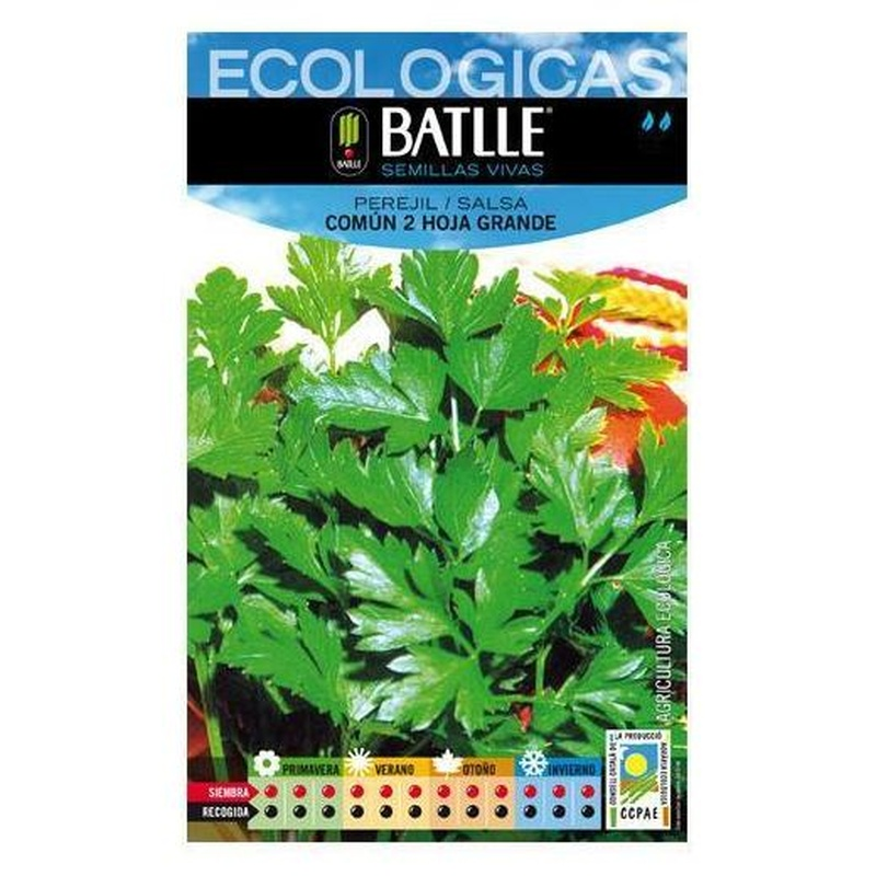 Semillas ecológicas de Perejil común 2 hoja grande Ref.7