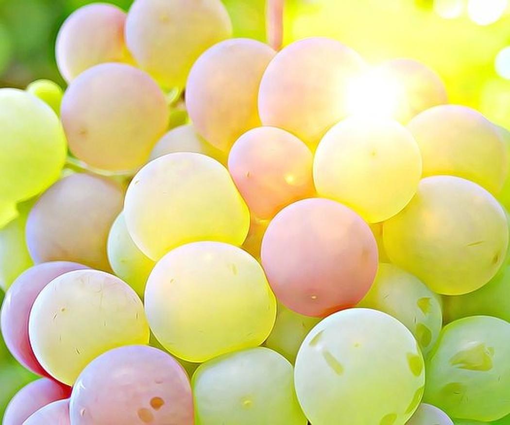 Tipos de uvas españolas