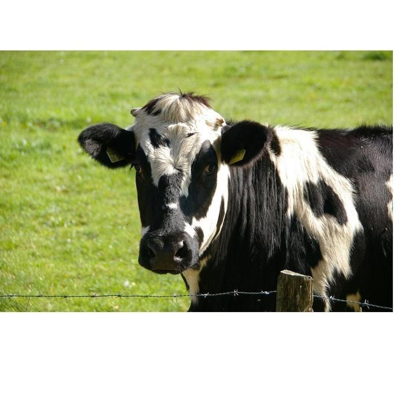 Grandes animales: Productos y Servicios de Comercial Hoznayo, S.L.