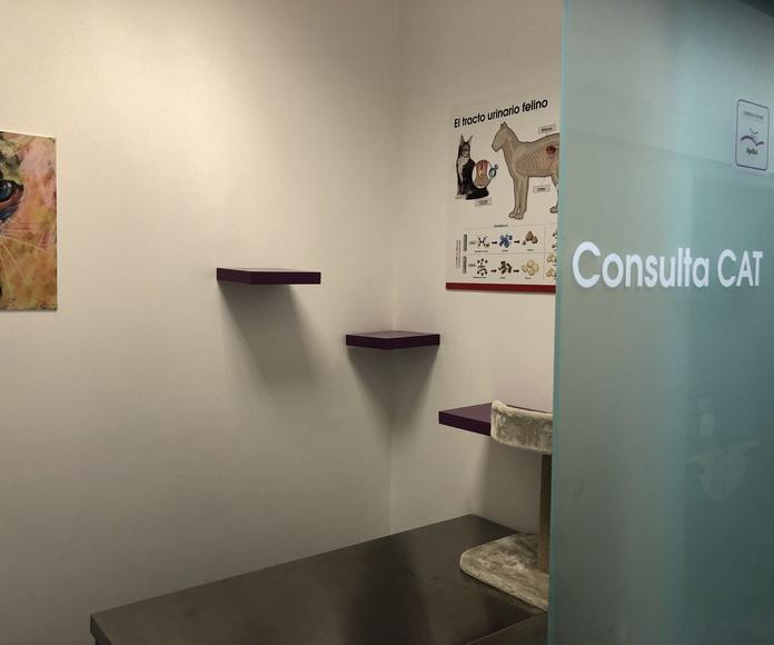 Consultas: Nuestros servicios de Huellas Centro Veterinario