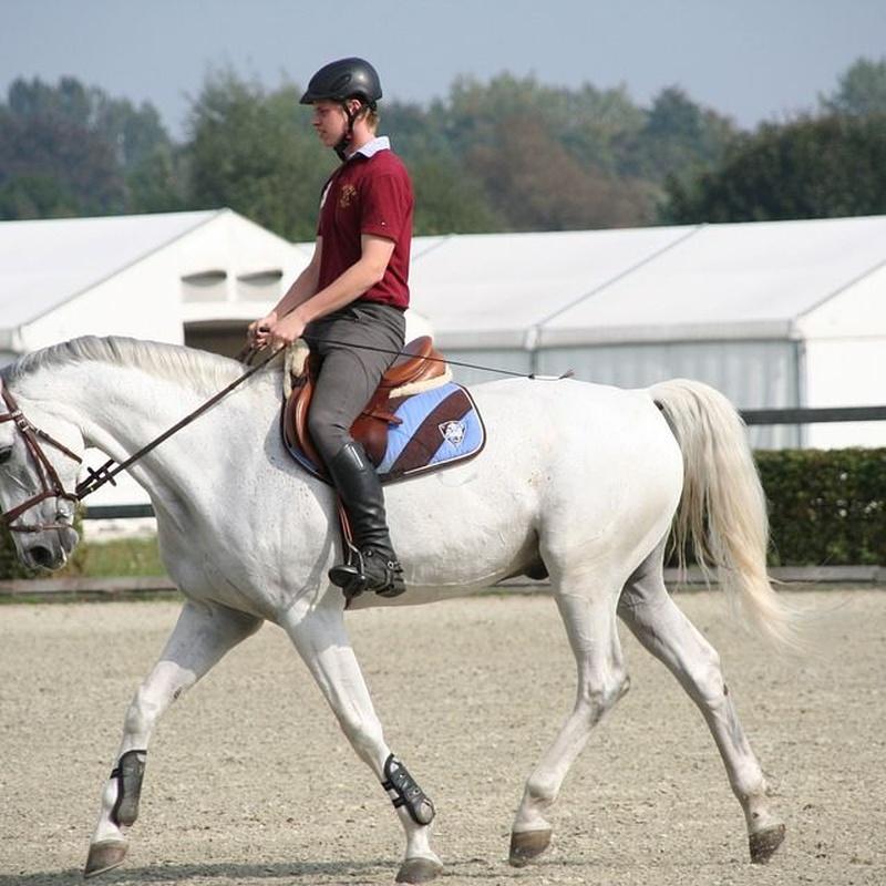 Horse Riding Courses: Services de Equestrian Club El Alamo