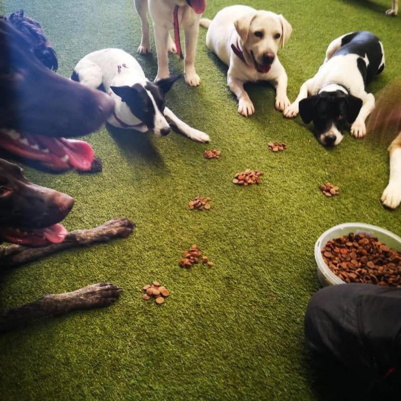 Adiestramiento: Servicios de Centro Canino Oxican