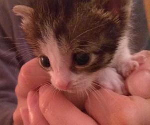 Can Exprés servicio veterinario a domicilio Zaragoza: esta es Princesa, está buscando dueño interesados llamen 661715114