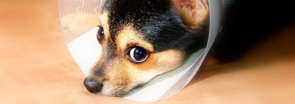 Urgências veterinárias em Almada - Vetalmada-Clínica Veterinária