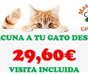 Vacuna a tu Gat@ desde 29,60€