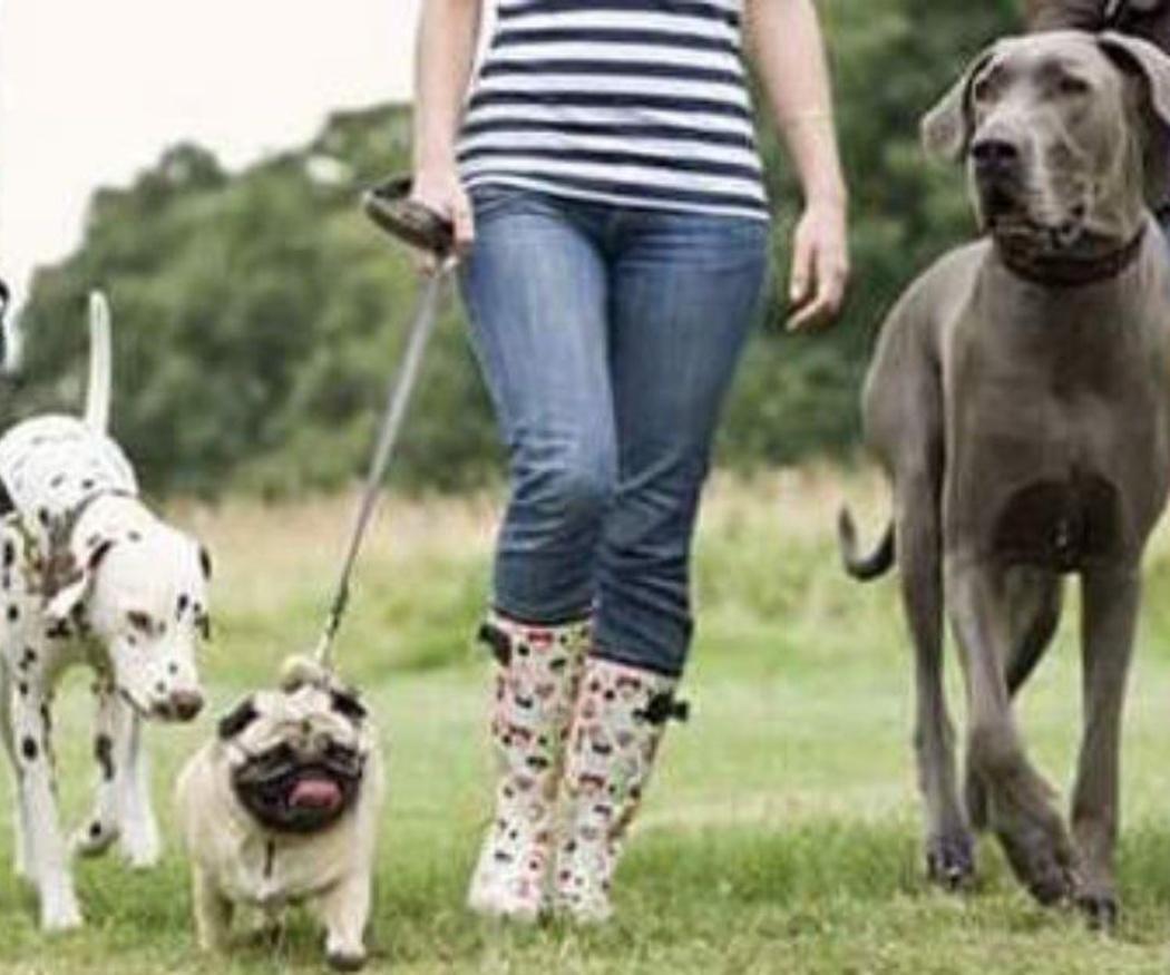 Los peligros del estrés en tu perro