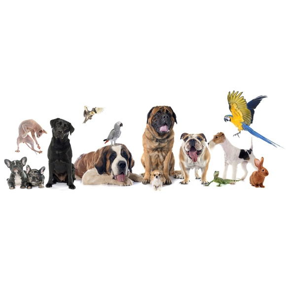 Cuidados básicos de tu mascota: Servicios de Clinica Veterinaria Exotia Santa Ursula