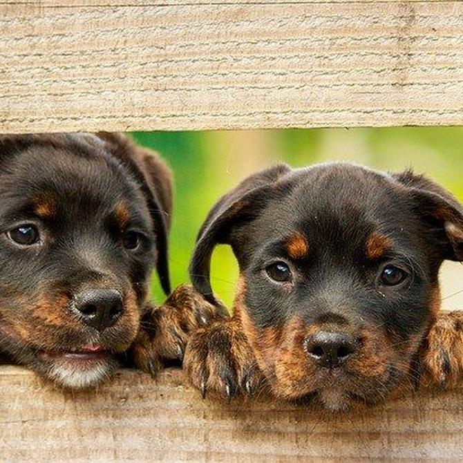 Los mejores trucos para educar a tu perro