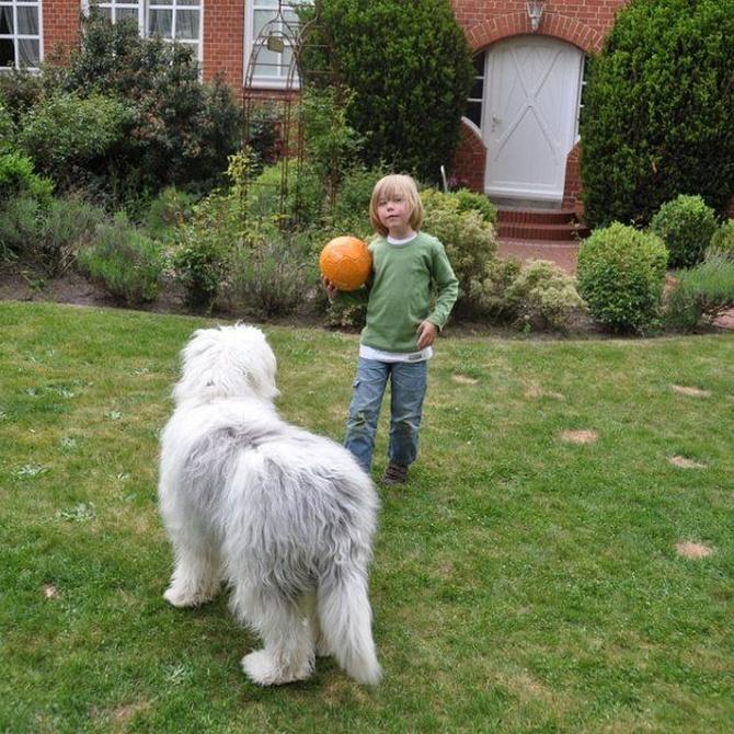 Que hacer si tu hijo tiene fobia a los perros