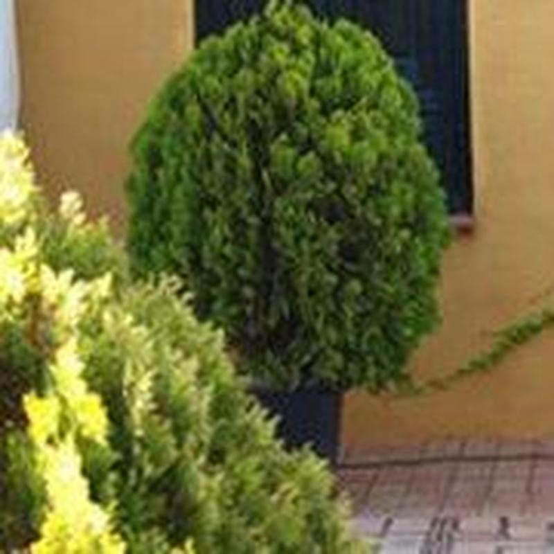 Jardinería: Tipos de carpas de Carpas GPI