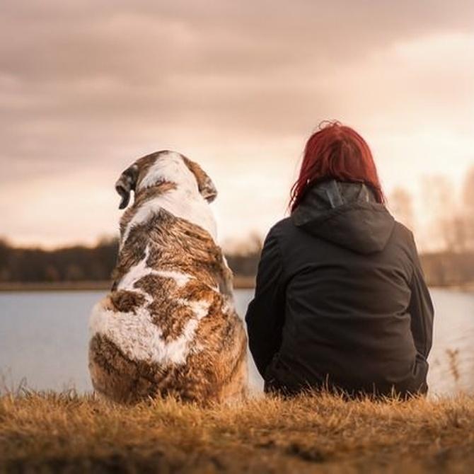 ¿Sabes qué beneficios te aporta tu mascota?