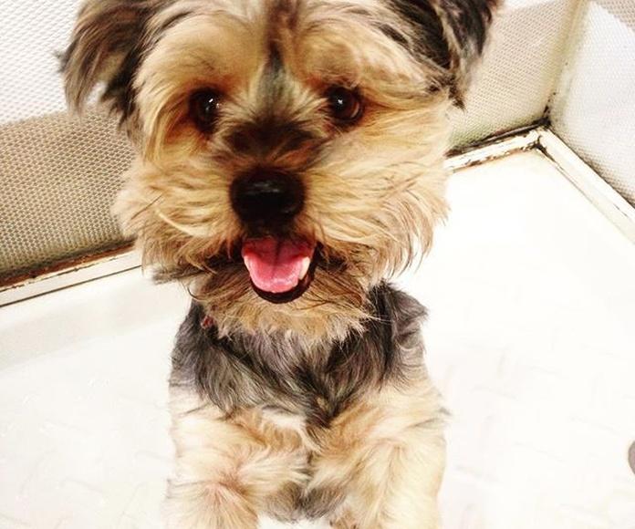Perruquería canina Rex: Productos y servicios de Perruqueria Canina Rex