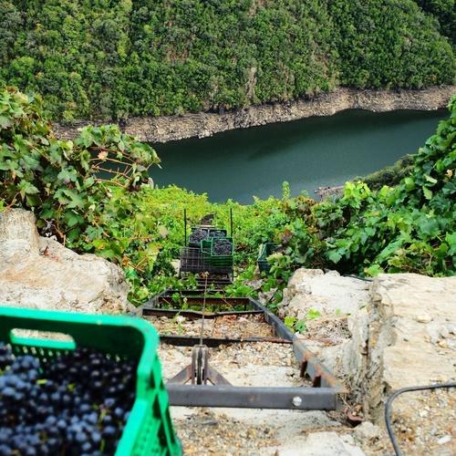 Conoce la viticultura heroica