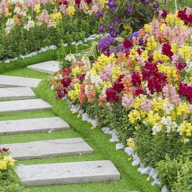 Trucos para tu jardín