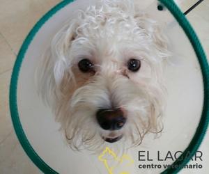 Tratamos las dolencias de tu mascota en El Sauzal