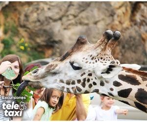 Excursiones: Zoo de Cabarceno